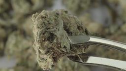 Cannabis. Close-up. Macro. Marijuana Footage
