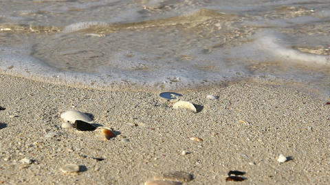 Water surf on sand, close up, one UAE Dirham coin lie on beach between shells Footage