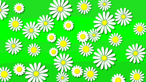 Flowers bloom Animation