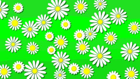 Flowers bloom Animation