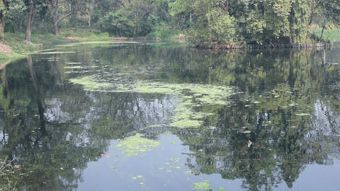 Lake 1 - botanical garden - Howrah -west bengal - India Footage