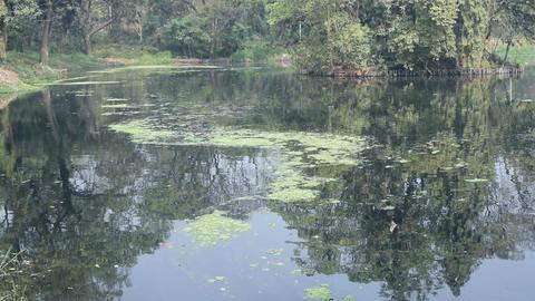 Lake 1 - botanical garden - Howrah -west bengal - India 画像