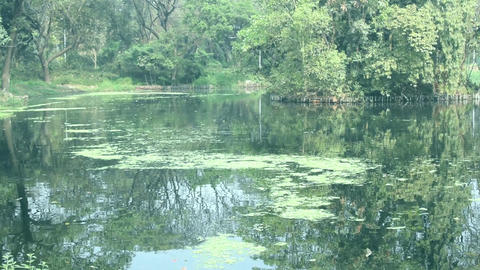 Lake 2 - botanical garden - Howrah -west bengal - India Footage