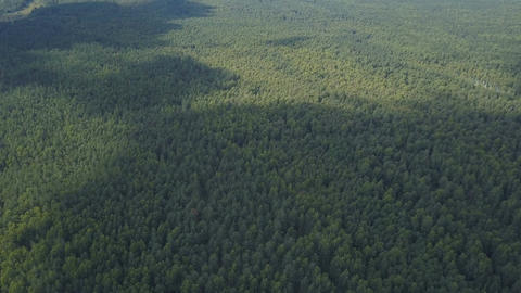 Aerial view of clouds shadows on forest at summer Image