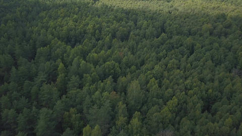 Fly over deep forest at summer Footage