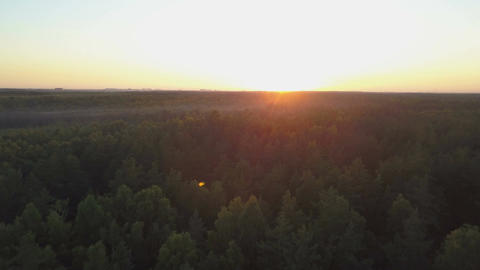 Fly over a deep forest on golden hour Footage