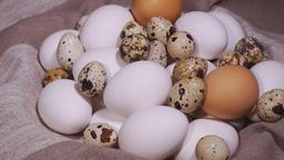 Bird eggs. Different kinds of bird eggs Footage