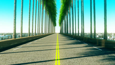 Driving through palm trees on an empty road in the afternoon Animation