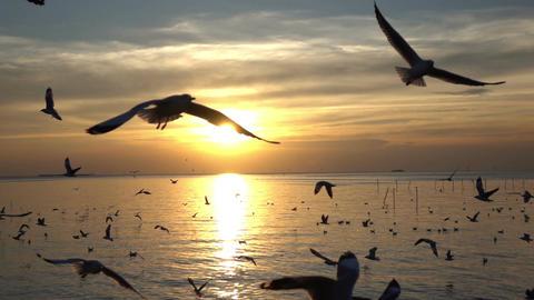 Bird flying on blue sky in sunset slow motion Image