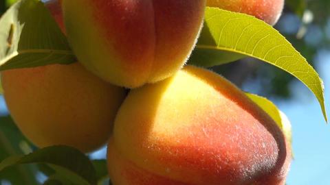 Close up peach00008 Footage