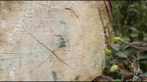 close up of a cut tree Filmmaterial
