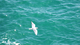 Seagull flying over the ocean Footage