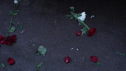Roses on the asphalt. People walk on dirty flowers Image
