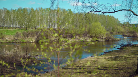 Summer landscape with a river and trees Live Action