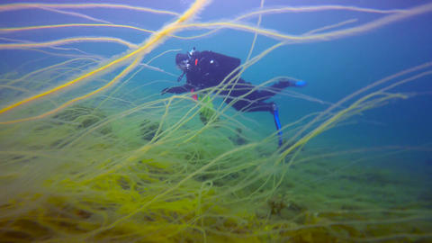 Exciting underwater diving in the cold Barents sea. Arctic ocean. Russia Footage