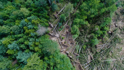 Storm damage in the forest Live Action