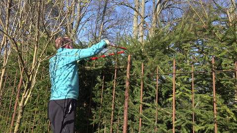 Gardener man prune fir tree hedge fence with red clippers. 4K Footage