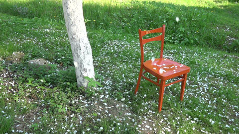 White apple tree petals falling in spring on orange chair, slow motion Footage