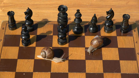 Two garden snails on old wooden chessboard playing in chess Footage