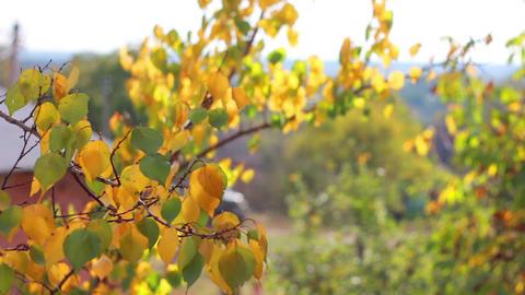 Autumn leaves 1 Stock Video Footage