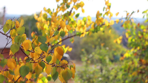 Autumn leaves 1 Stock Video Footage