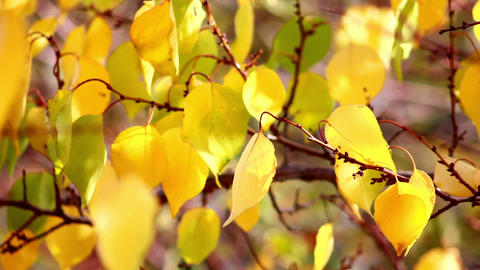 Autumn leaves 5 Stock Video Footage