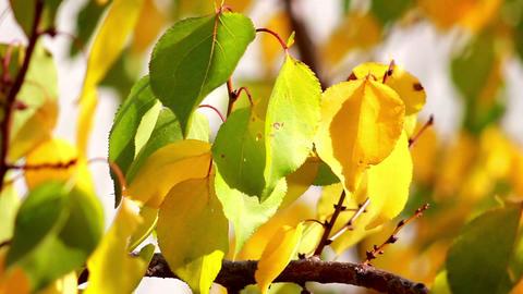 Autumn leaves 9 Stock Video Footage