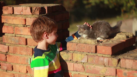 Boy playing with a cat 1 Stock Video Footage