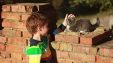 Boy playing with a cat 1 Footage