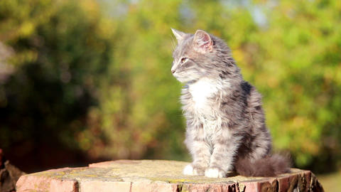 Cat on a fence 2 Stock Video Footage