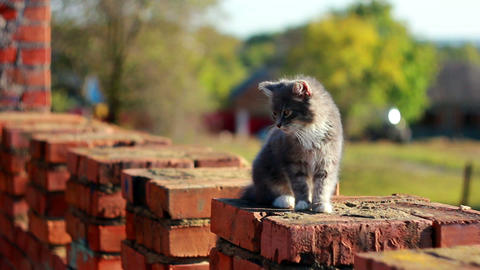 Cat on a fence 8 Stock Video Footage