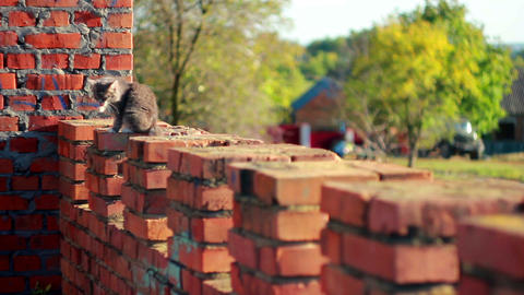 Cat on a fence 10 Stock Video Footage