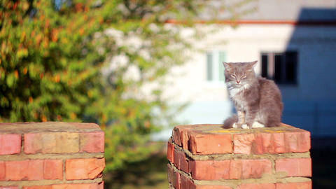 Cat on a fence 12 Stock Video Footage
