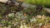 tiny mushroom Footage