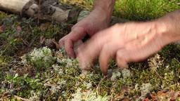 tiny mushroom Stock Video Footage