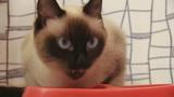 cat eating ビデオ