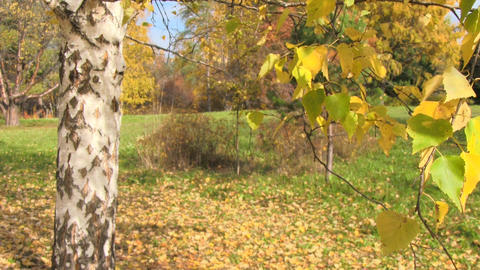 autumn landscape Stock Video Footage