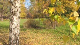 autumn landscape Footage