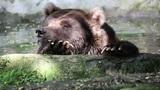 Bear 02 Footage