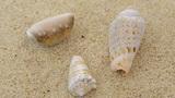Rotating shells Footage