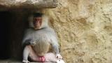 Monkey 02 Footage