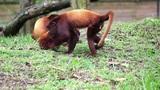 Monkeys 04 Footage
