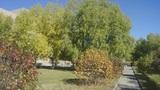 Autumn Park 03 (pan right) Footage