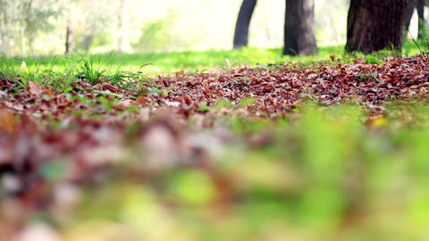 Dried and fresh fallen leaves Stock Video Footage