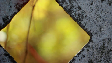Autumn scene with red and green leafs behind the fence in... Stock Video Footage