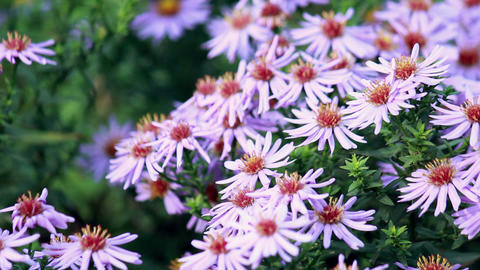Summer flowers waving in the wind Stock Video Footage