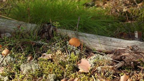 yellow mushrooms Stock Video Footage