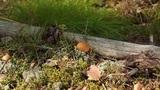 yellow mushrooms Footage