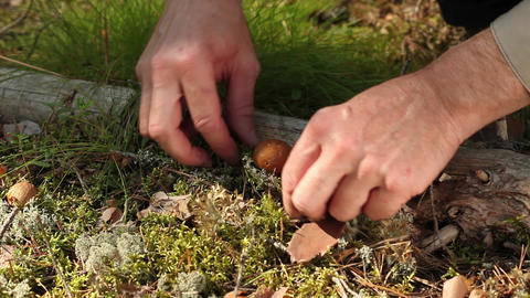 yellow mushrooms Stock Video Footage