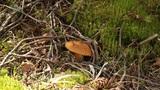 Mushroom Footage